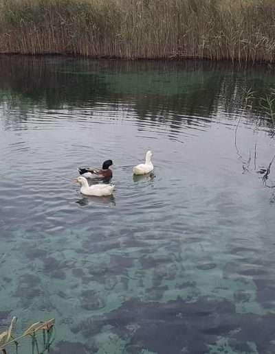 immerso nella natura